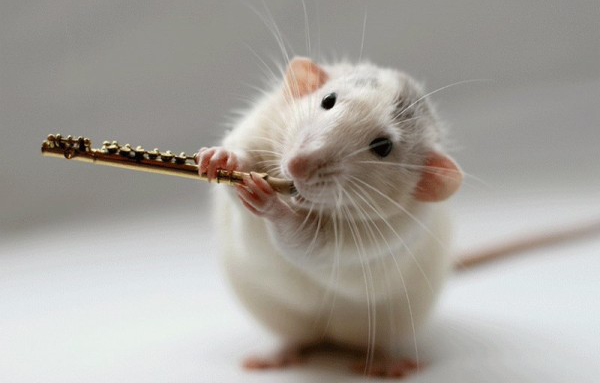 гороскоп крыса